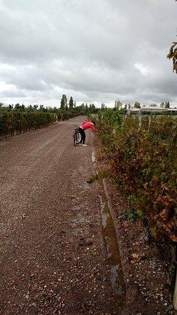 La Posada de Bodega Vistalba: Bici por la viña