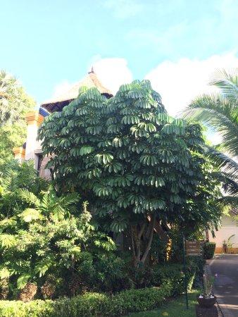 Movenpick Resort & Spa Karon Beach Phuket: photo4.jpg