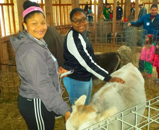 Pittsfield, ماساتشوستس: In the pen petting adorable cow!