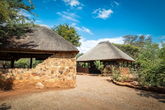 Madikwe Game Reserve Picture