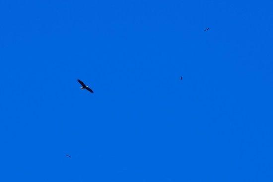 Bagley, WI: 4 Eagles flying high