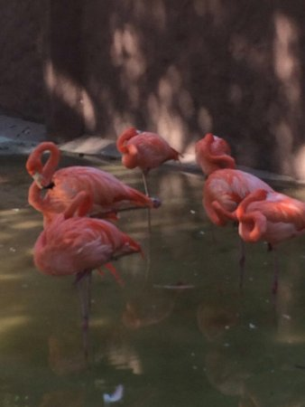 Ideal para los peques picture of zoo culiacan culiacan - Compritas para los peques ...