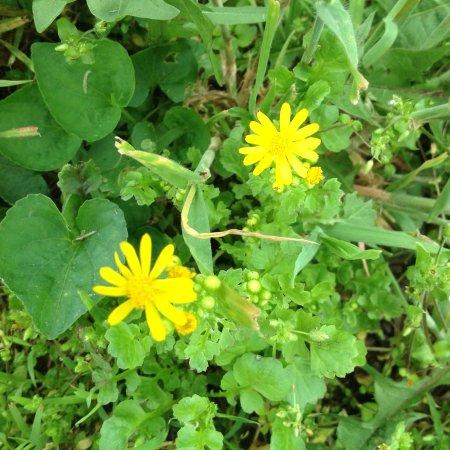 Fox Ridge State Park: Wild flowers