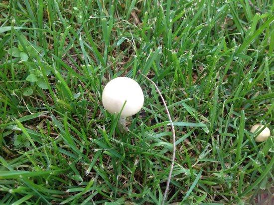Fox Ridge State Park: Nature, mushrooms, wild flowers
