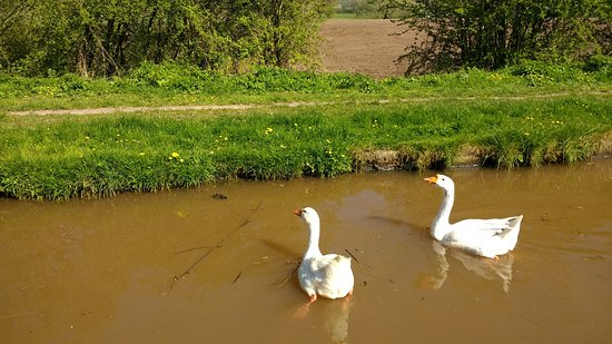 Middlewich, UK: We all enjoyed looking out for the wildlife along the way