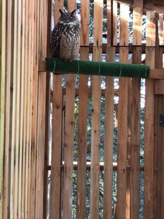 Cascades Raptor Center: Owl on site