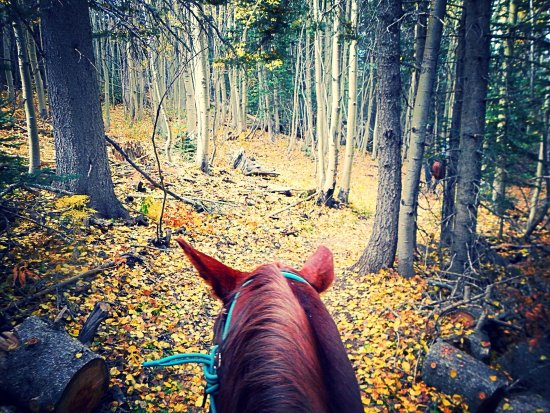 Edgewood, NM: Fall Color Ride