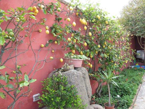 Giardini ben curati picture of la locanda di - Giardini curati ...