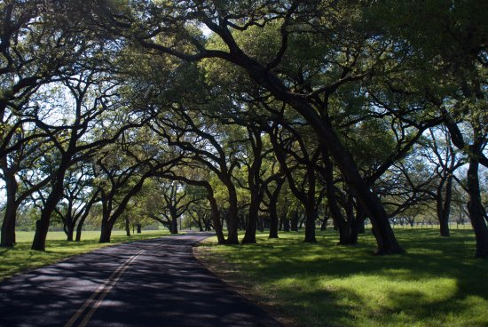 Stonewall, TX: The oak lined lane leading to the private residence