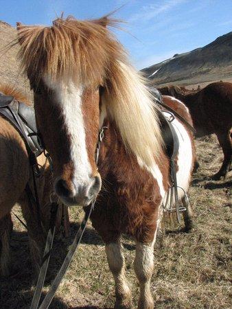 Mosfellsbaer, Islandia: Isn't she just beautiful?