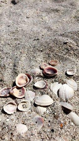 Surf Beach Resort : photo4.jpg
