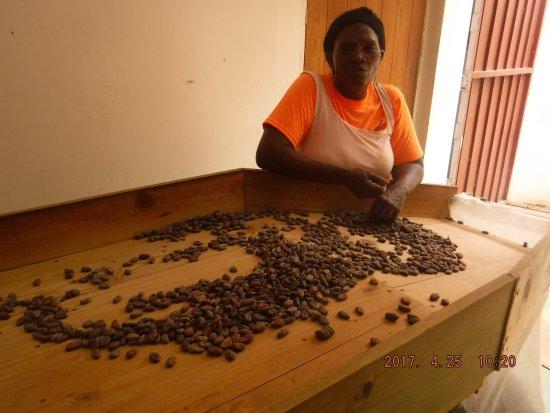 Saint Mark Parish, Grenada: sorting the beans