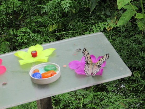 Thames, New Zealand: butterflies attracted to sweet things