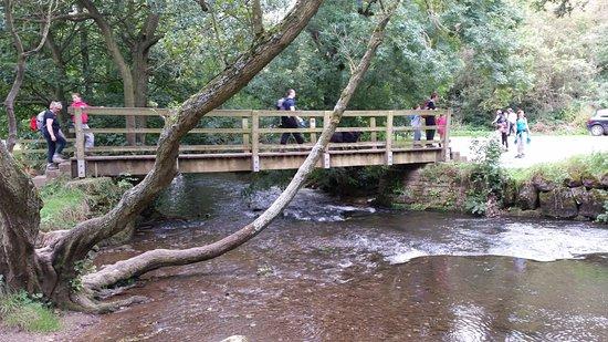 Ashbourne, UK: Dovedale gentle stroll.