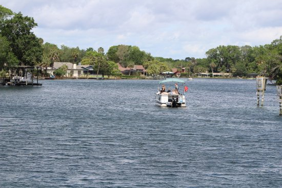 Homosassa Springs, FL: photo4.jpg