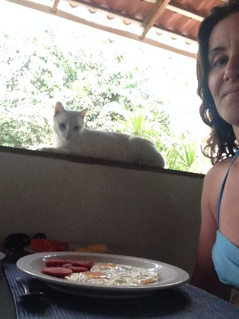 Hotel La Puerta del Sol: Blanca the cat overseeing breakfast