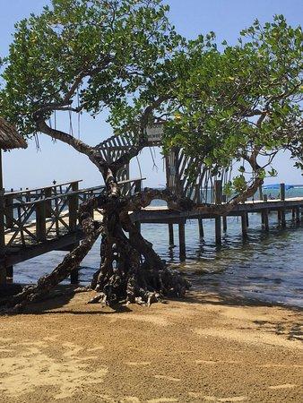 Sandy Bay, Honduras: photo2.jpg
