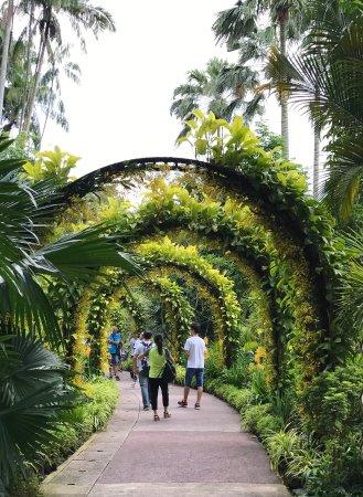 「シンガポール 緑」の画像検索結果