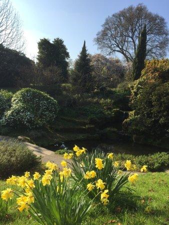 Haywards Heath, UK: photo1.jpg