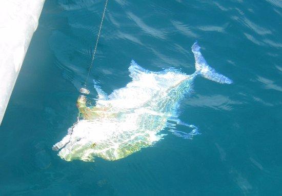 Νησί Beqa, Φίτζι: Fishing!