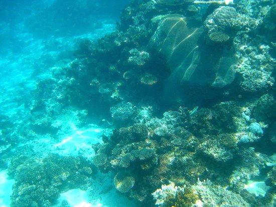 Νησί Beqa, Φίτζι: Sici reef day trip