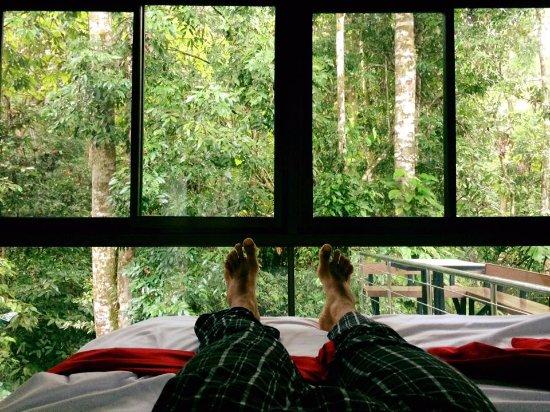 Ojochal, Kosta Rika: Amanecí con mis pies en el bosque. Las amplias ventanas integran el exterior a la habitación.