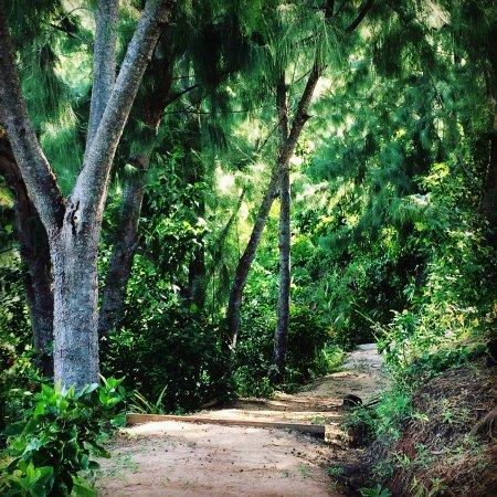 Остров Матакавалеву, Фиджи: Tropical path to bures