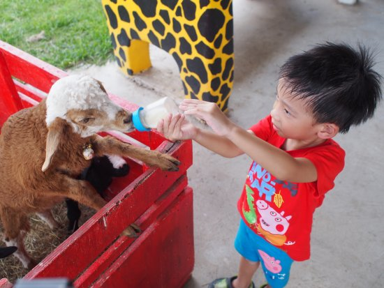Pak Chong, Thailand: feeding