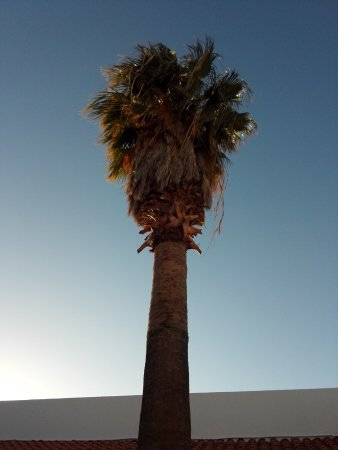 Catavina, Meksika: Palme auf dem Hotelgelände