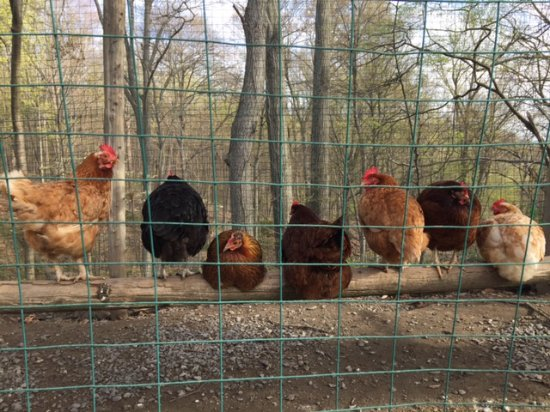 Milton, NY: Farm residents at Buttermilk Falls Inn