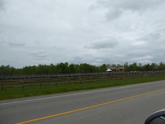 New Kent, VA: Vines