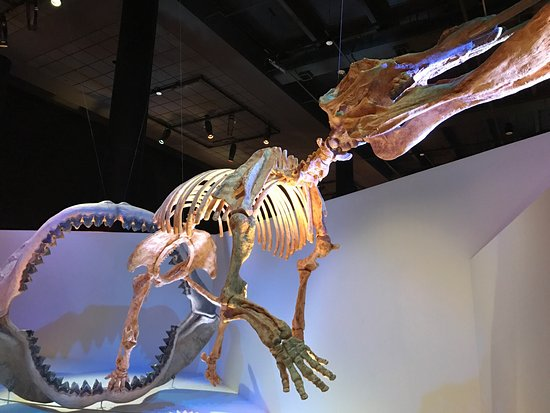The Houston Museum of Natural Science : photo7.jpg