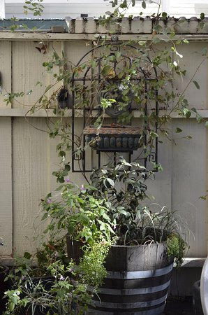 Jamestown, Californien: Patio fountain and vines