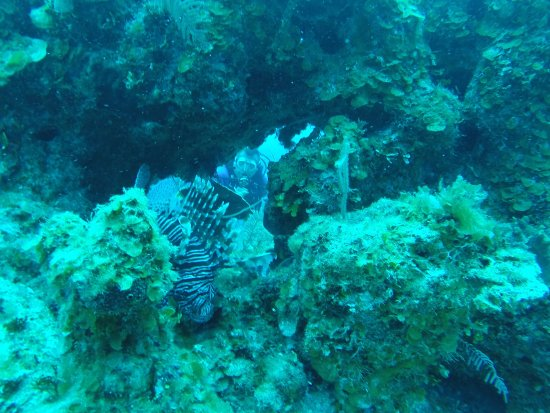 Grand Bahama Scuba: Rito and Lionfish