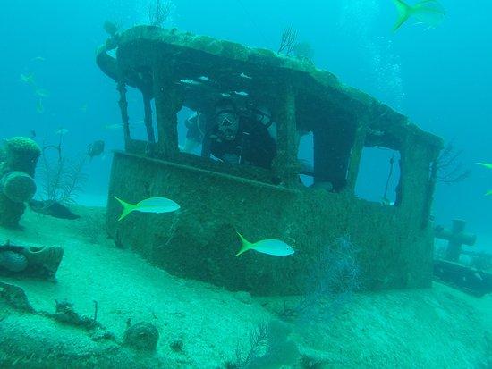Grand Bahama Scuba: Harris in Wreck