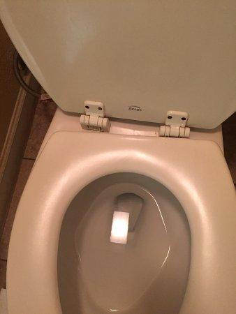 Aiken, SC: broken toilet seat