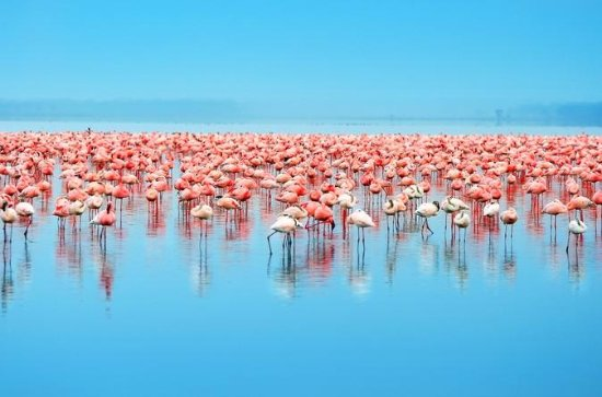 Day Trip to Celestun: Flamingos...