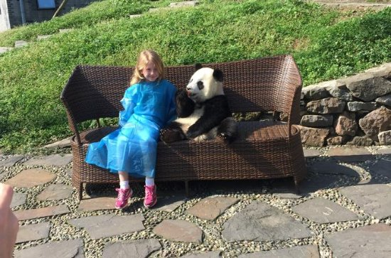 Private Day Trip to Dujiangyan Panda...