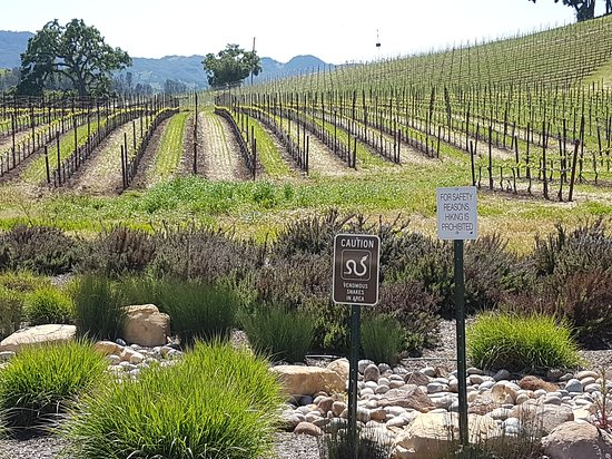 Paso Robles, CA: 20170421_192448_large.jpg