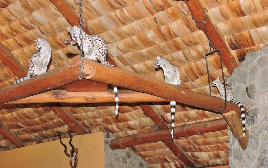 Ndutu Safari Lodge: Resident Common Genets