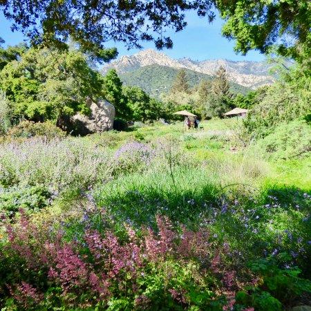 Wild Iris Picture Of Santa Barbara Botanic Garden Santa Barbara Tripadvisor