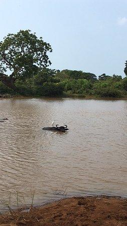 Tissamaharama, Sri Lanka: photo1.jpg