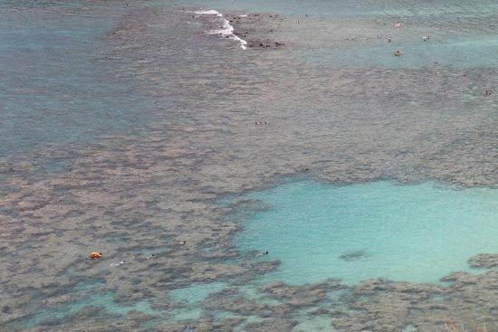 Hanauma Bay Nature Preserve: extensive reef