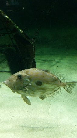 Nordsoen Oceanarium : Nordsøen Oceanarium