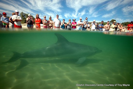 Dolphin Discovery Centre: Interaction Zone