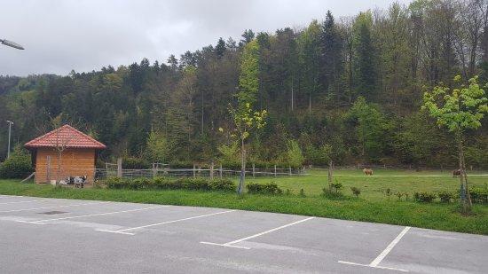 Cerklje, سلوفينيا: small zoo and children's area