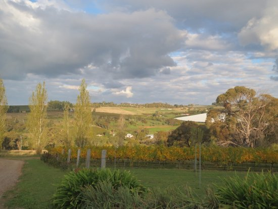 Borrodell Vineyard: photo1.jpg