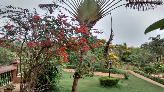 Thapovan Heritage Home: get your self lost in the beauty of trees and plants and the soothin breeze which comes