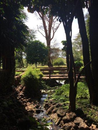 Amboseli Serena Safari Lodge: photo9.jpg