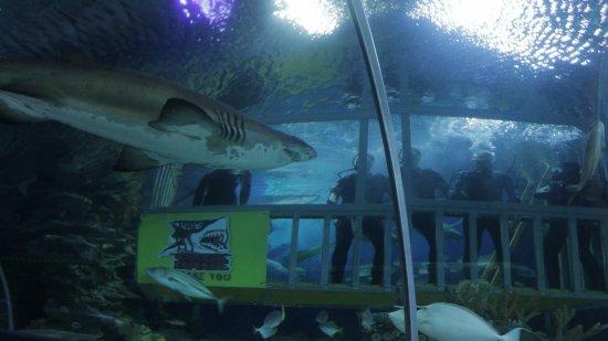 吉隆坡城中城水族館
